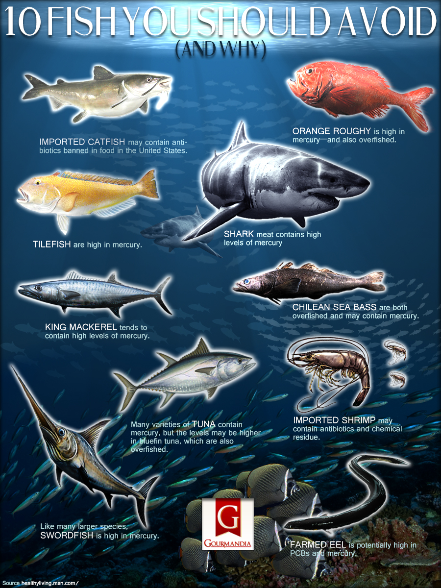 10 fish you should avoid and why infographic visualistan for Fish to avoid