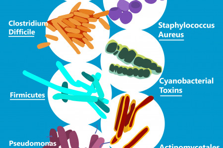 10 Kinds of Office Germs Infographic