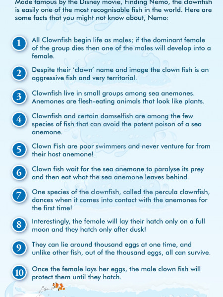 10 Little Known Facts About Clownfish Infographic