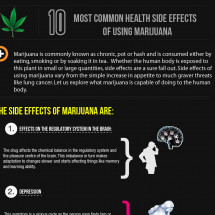 10 Most Common Health Side Effects of Using Marijuana Infographic