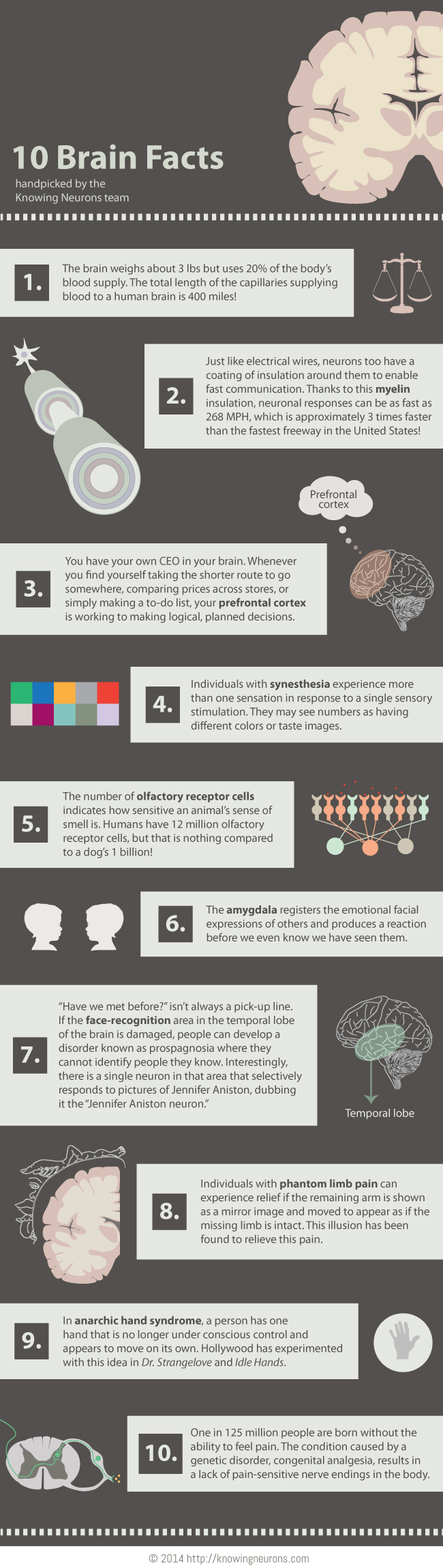 10 Brain Facts [Infographic]