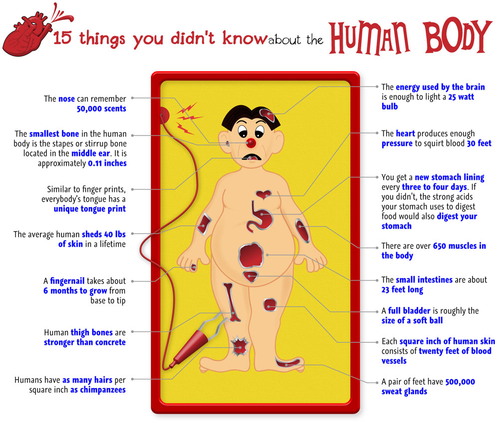 15 things you didn 39 t know about the human body visual ly