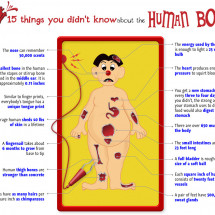 15 Things You Didn't Know About the Human Body Infographic