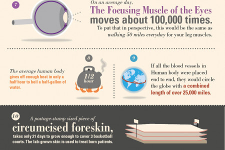 18 Amazing Facts About The Human Body  Infographic