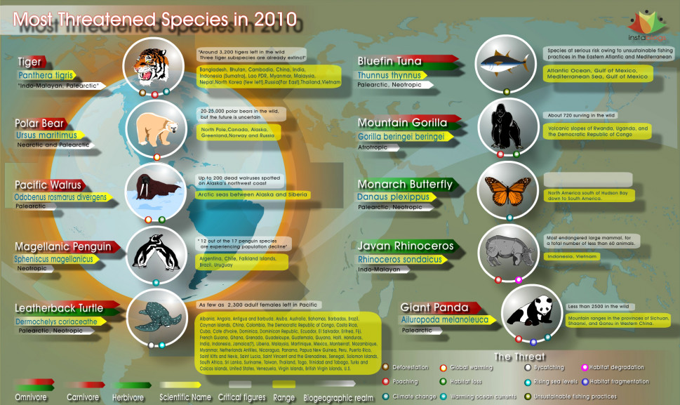 2010's Most Threatened Animal Species Infographic