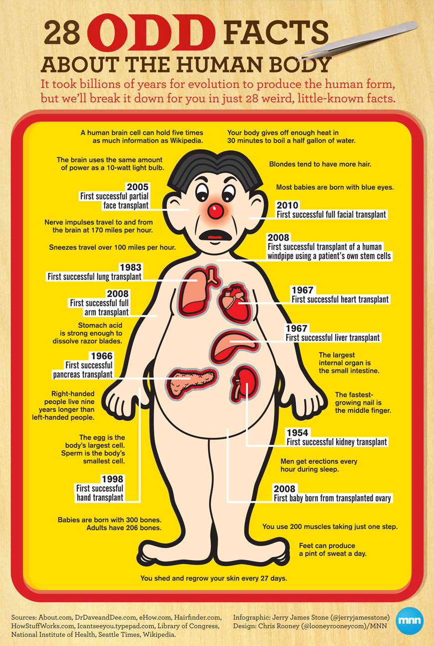 28 Odd Facts About the Human Body | Visual.ly