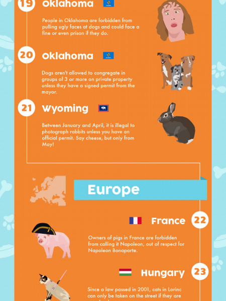 40 Insane Pet Laws Around The World Infographic