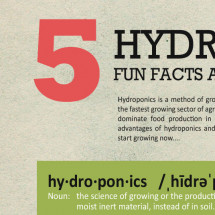 5 Hydroponic Fun Facts and Figures Infographic