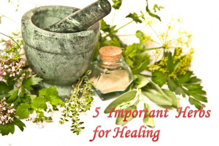 5 Important Herbs for Healing Infographic