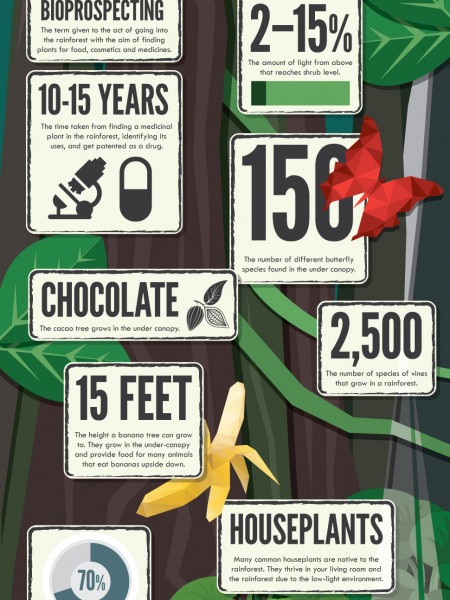 50 Amazing Facts About Rainforests  Infographic