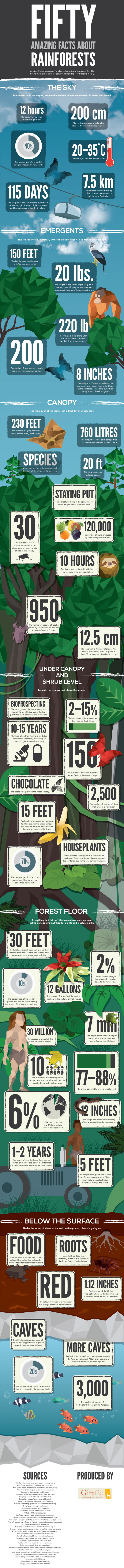 50 Incredible Facts About Rainforests