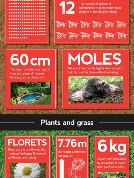 Fifty Things You Didn't Know About Your Garden Infographic
