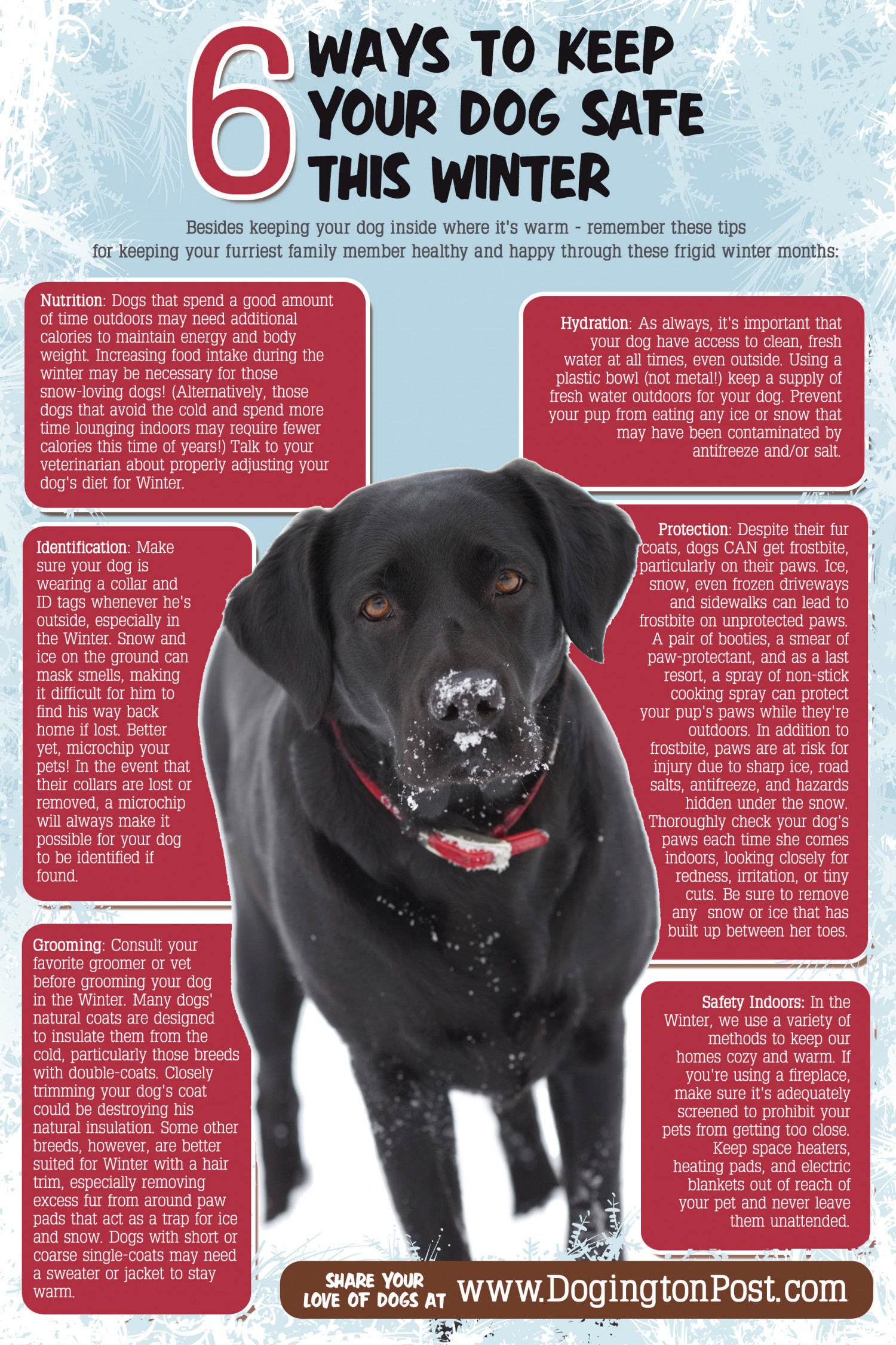 6 Ways to Keep your Dog Safe this Winter Infographic