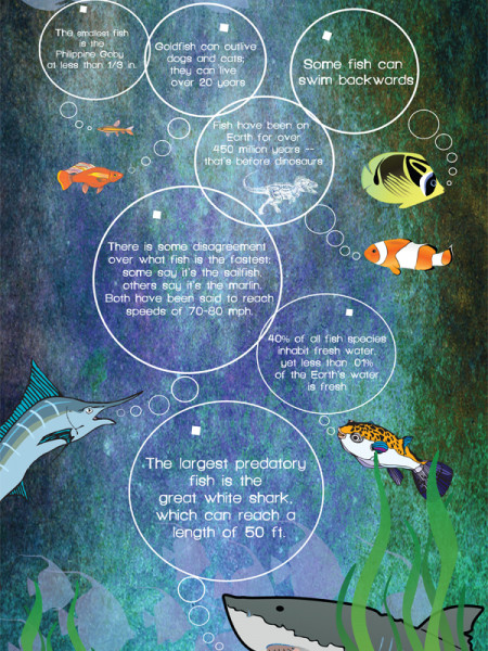 7 Fantastic Facts About Fish Infographic