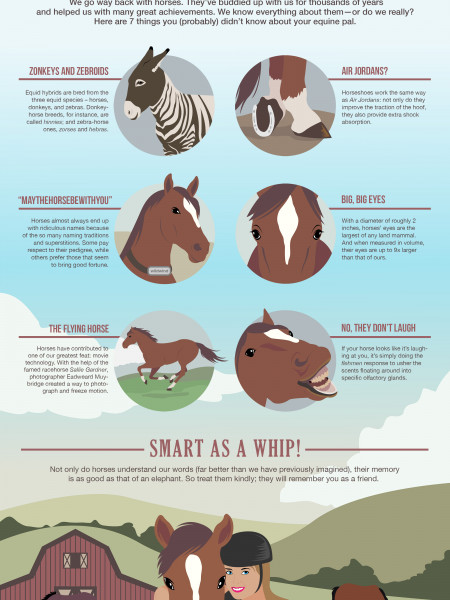 7 Things You (Probably) Didn't Know About Your Horse Infographic