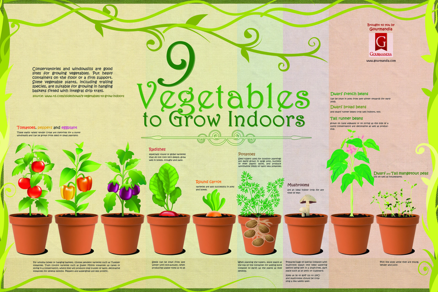 9 Vegetables to Grow Indoors Infographic