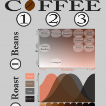 Coffee 123: Beans, Roast & Brew Infographic