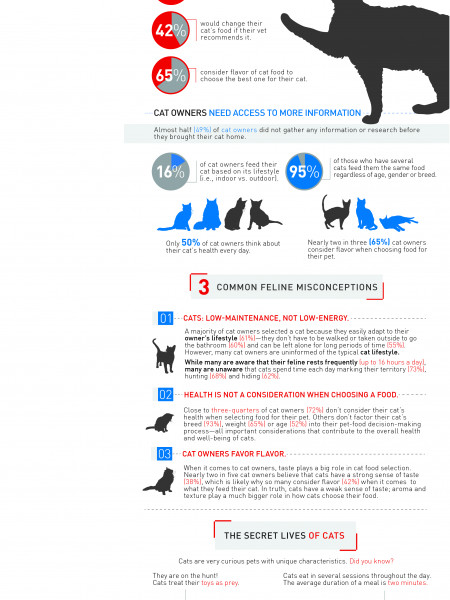Curious Cat Infographic