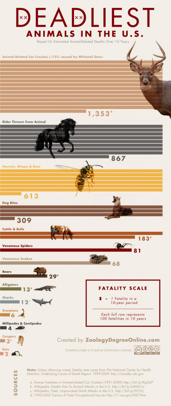Deadliest Animals in the US