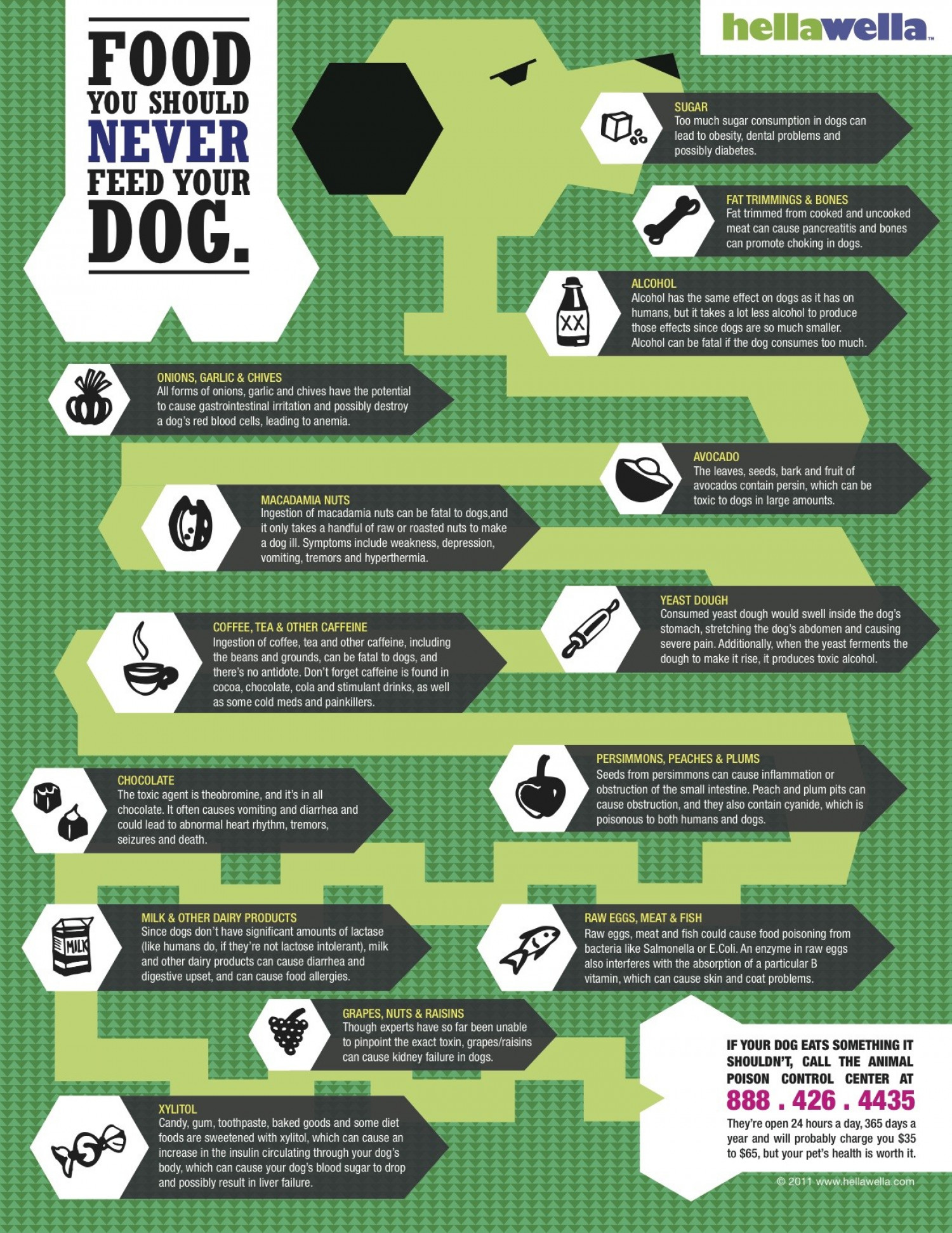Foods You Should Never Feed Your Dog Infographic