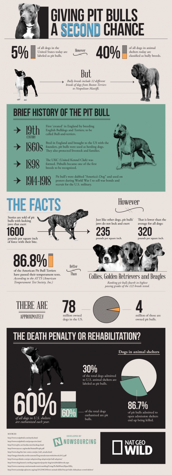 Giving Pit Bulls a Second Chance Infographic
