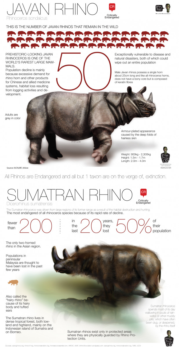 JAVAN RHINO POPULATION