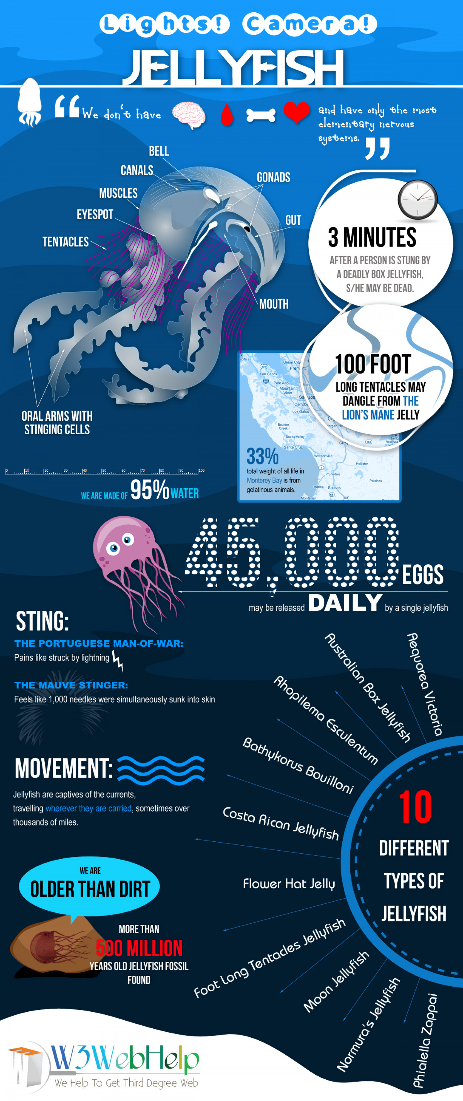 Jellyfish Infographic
