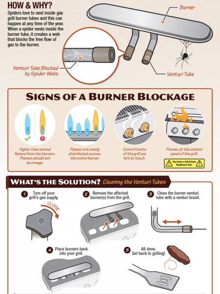 There's a Spider in my Grill! Infographic