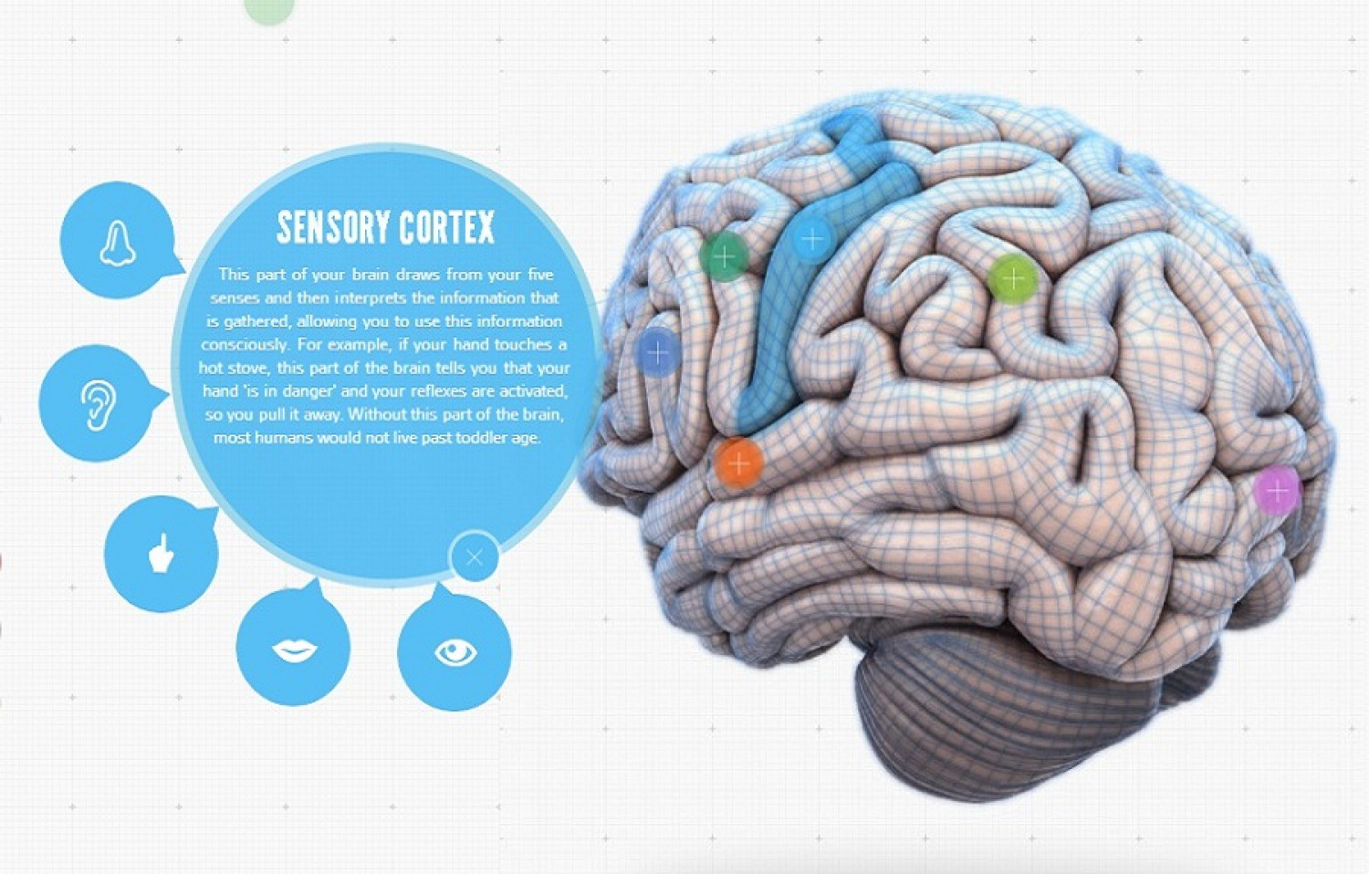 Your Brain Map: Strategies For Accelerated Learning Infographic