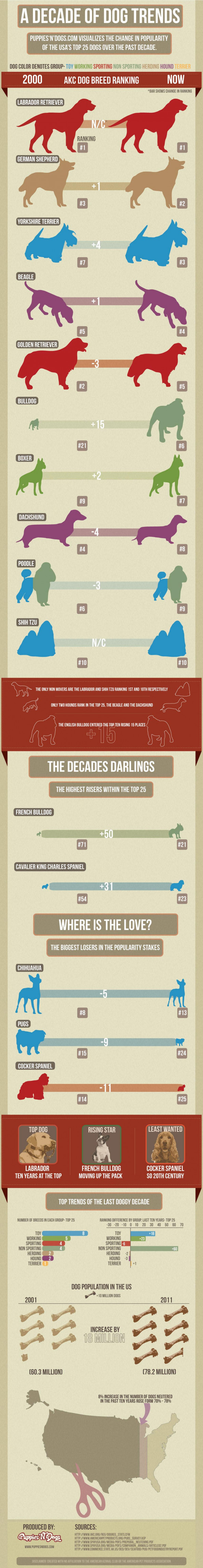 A Decade of Dogs Trends Infographic