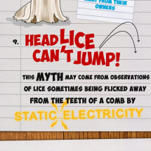 A Few Things You Didn't Want To Know About Headlice! Infographic