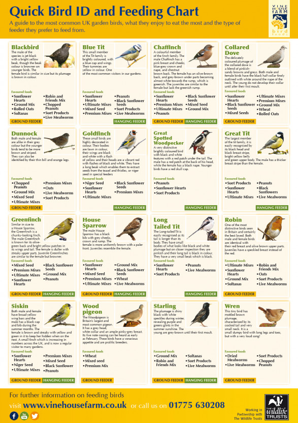 A Guide to Bird Feeding