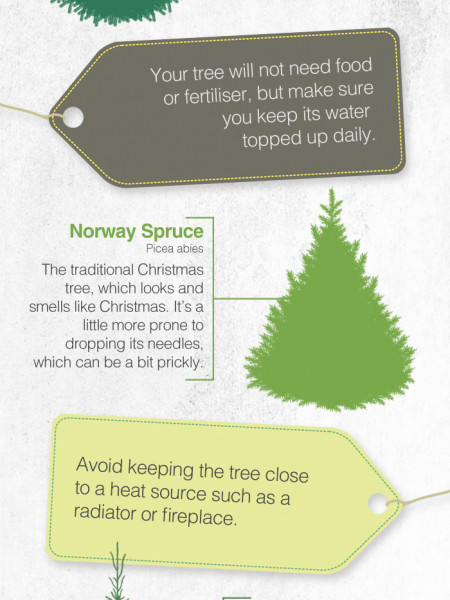 A guide to real Christmas trees Infographic