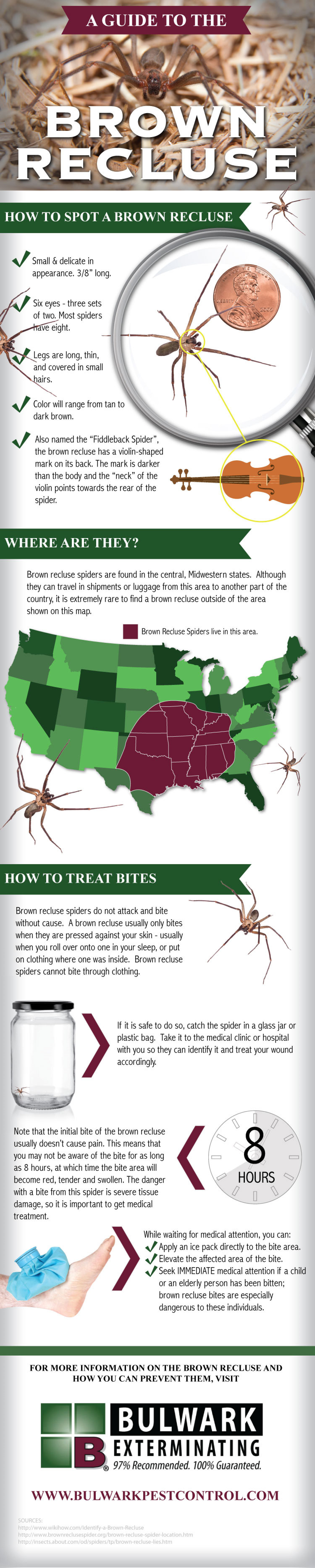 A Guide to the Brown Recluse Guide Infographic