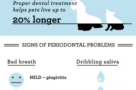 A Guide to Your Pet's Dental Care Infographic