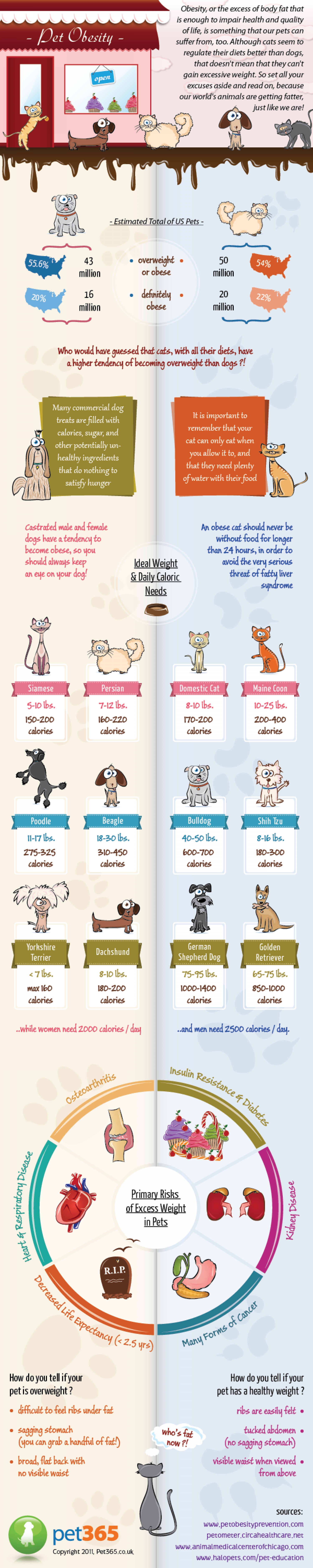A Healthy Pet is a Safer Pet Infographic