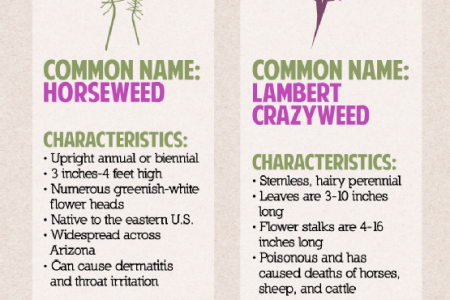 A Look at Common Arizona Weeds Infographic