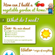 A Vegetable Garden at home Infographic