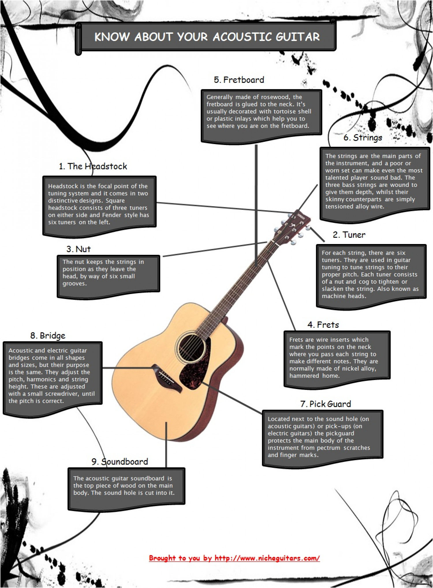 Know About Your Acoustic Guitar Infographic