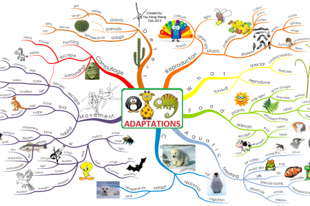Adaptations Infographic