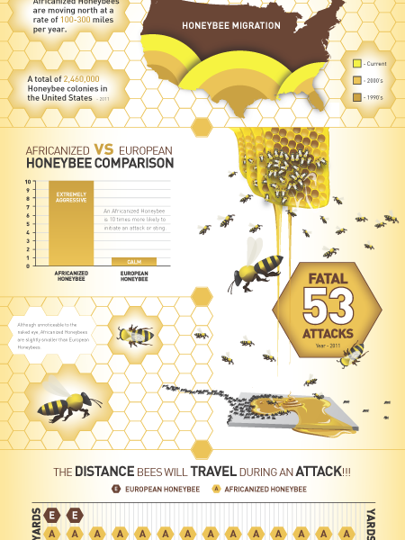 Africanized Honeybee Infographic