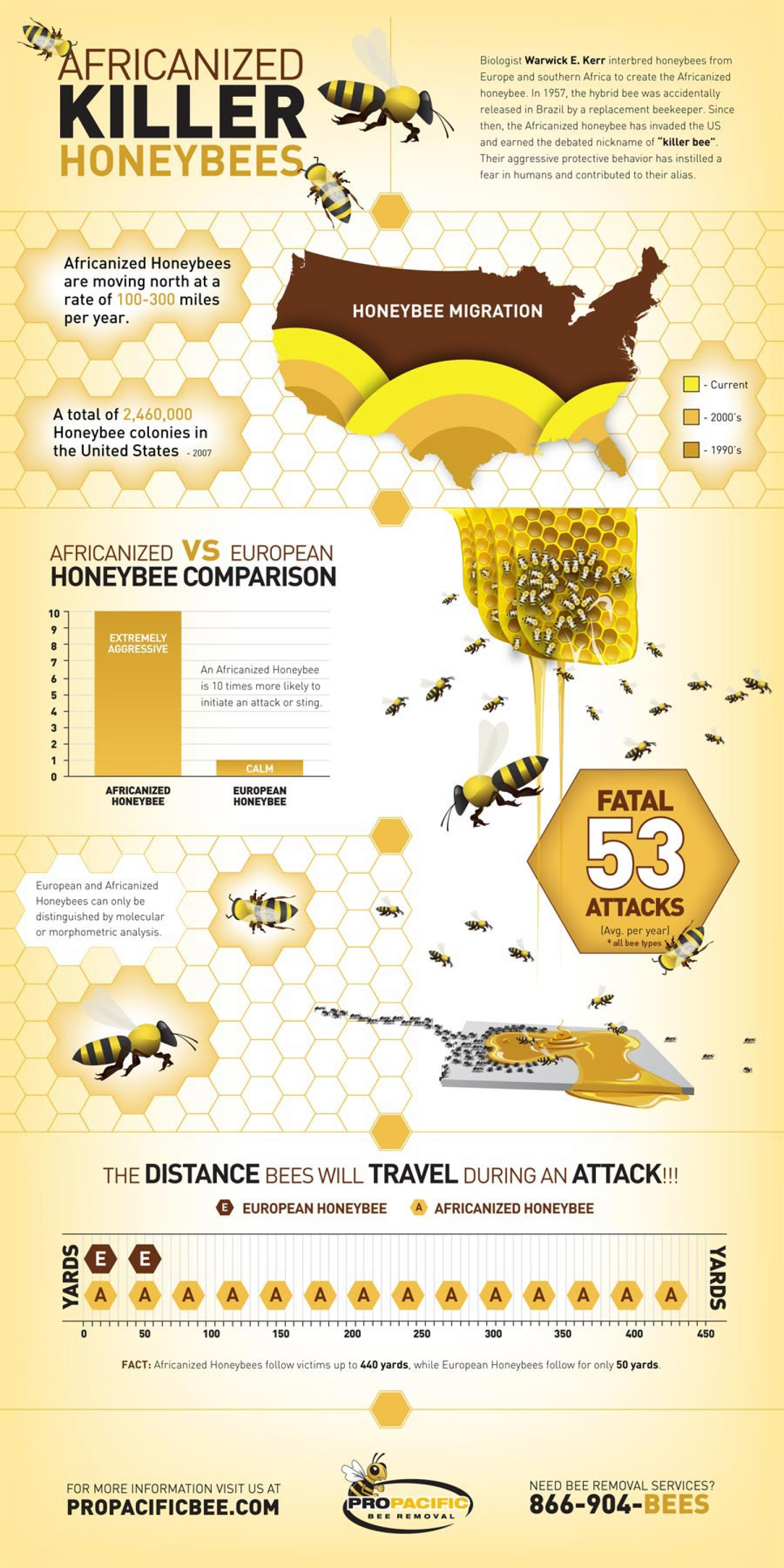 Africanized Killer Honey Bees Infographic
