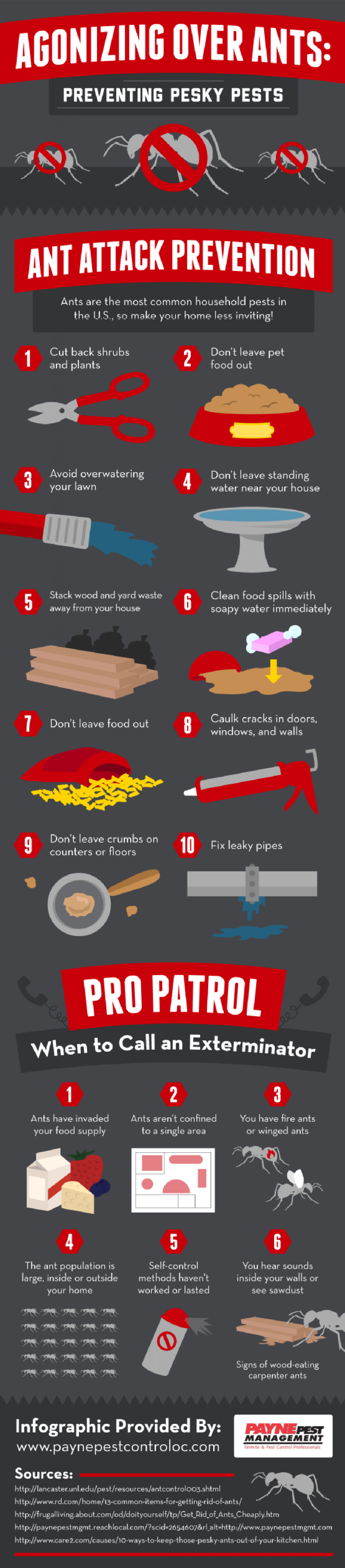 Agonizing Over Ants: Preventing Pesky Pests Infographic