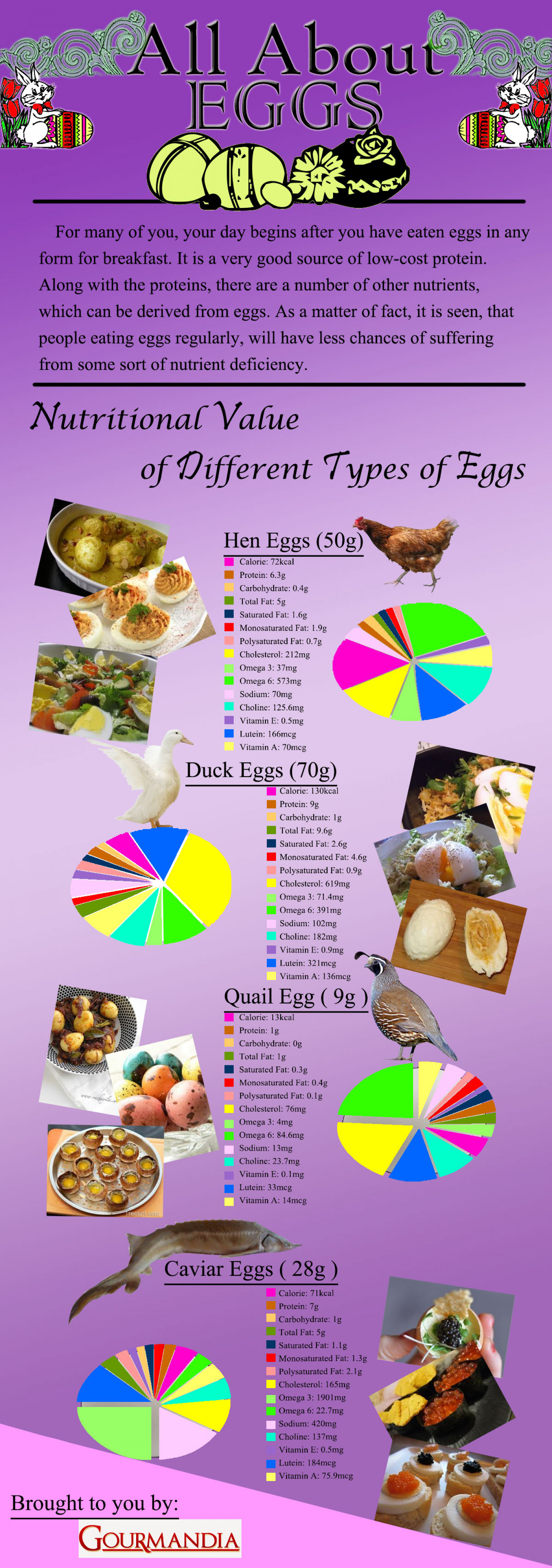 All About Eggs Infographic