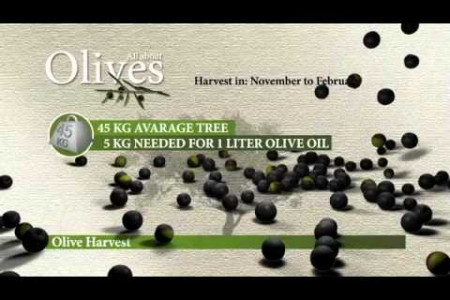 All about Olives Infographic