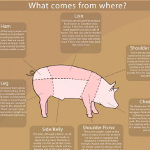 All About the Pig Infographic