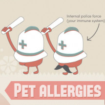 Allergies Infographic