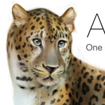 Amur Leopard 35 left in the wild Infographic