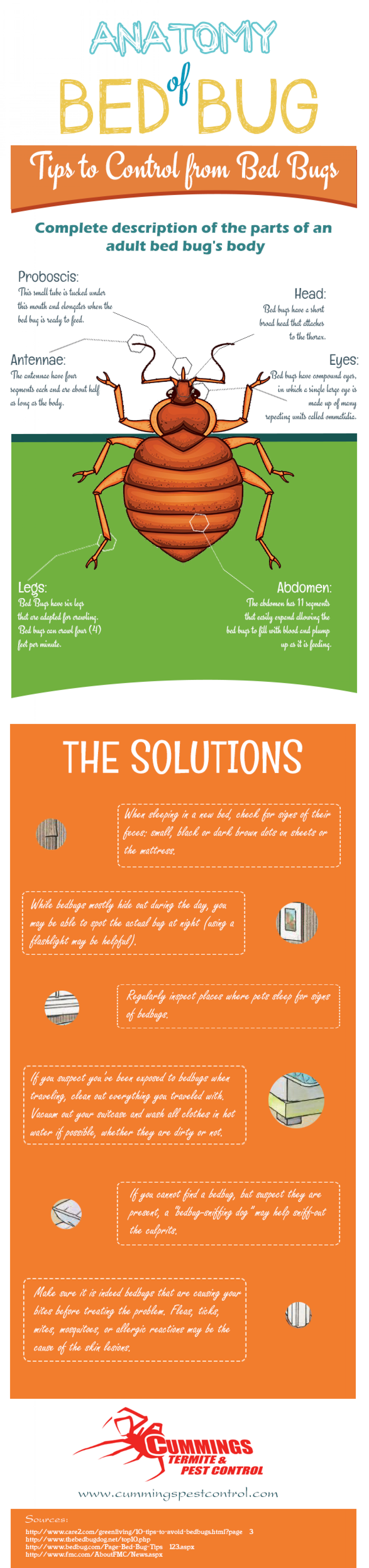 Anatomy of Bed Bug Tips to Control from Bed Bugs Infographic