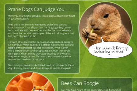 Animal Communication Facts Infographic